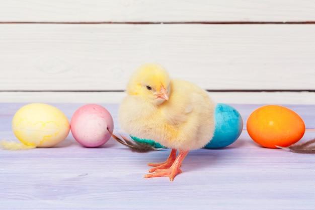 Цыпленок с пасхальными яйцами на деревянном столе Premium Фотографии