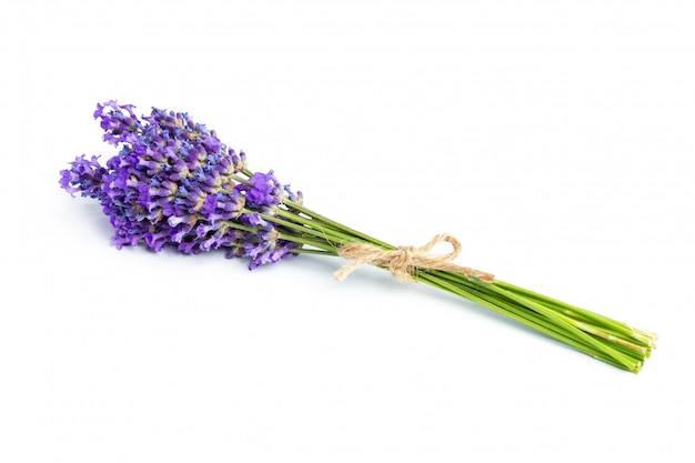 白い背景の上のラベンダーの花 Premium写真