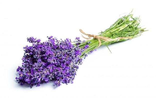 ラベンダーの花 Premium写真