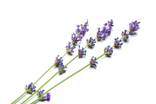 白のラベンダーの花 Premium写真