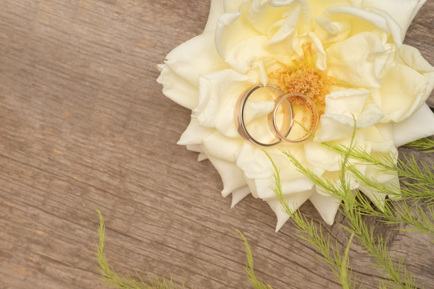 Обручальные кольца на белой розе на деревянном фоне Premium Фотографии