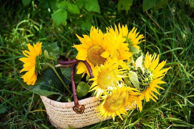 Букет подсолнухов лежит в соломенной сумке на зеленой траве. Premium Фотографии