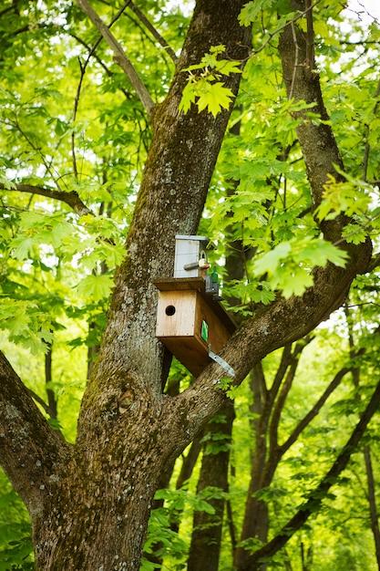 木の幹に巣箱と春の緑豊かな公園 Premium写真