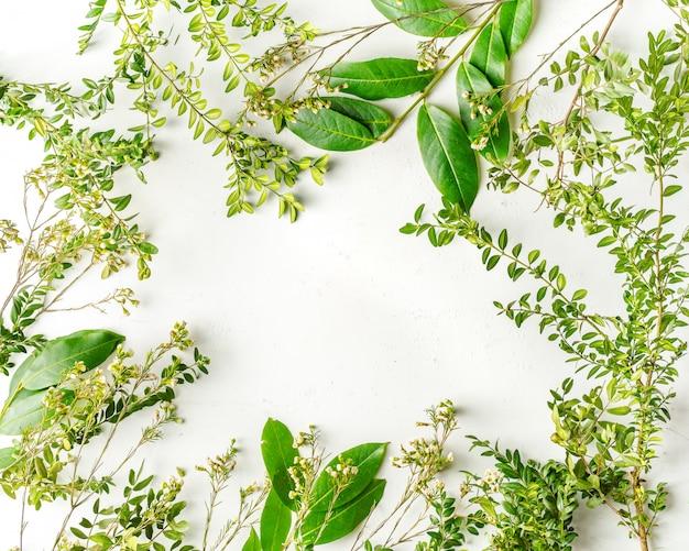 緑の木の枝と植物とフラットレイアウト Premium写真