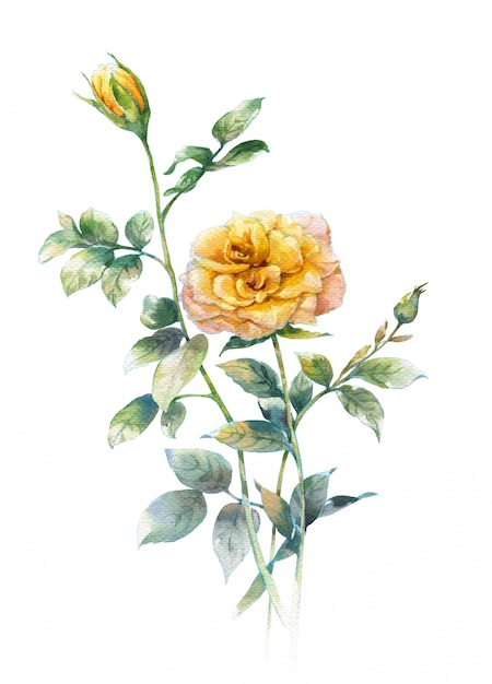 白地にバラの水彩画 Premium写真