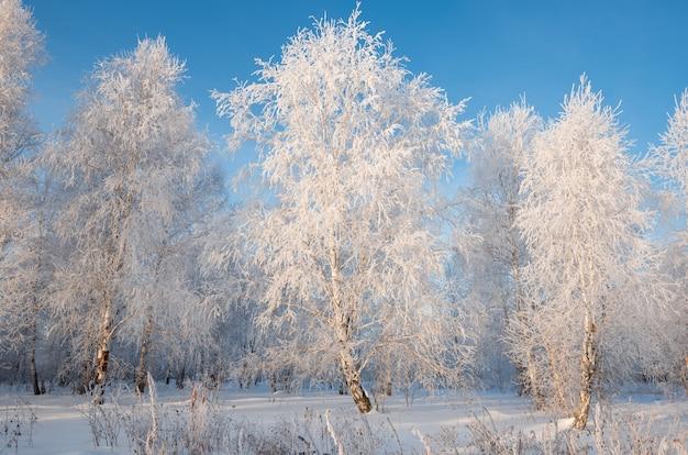 樹上の樹氷 Premium写真