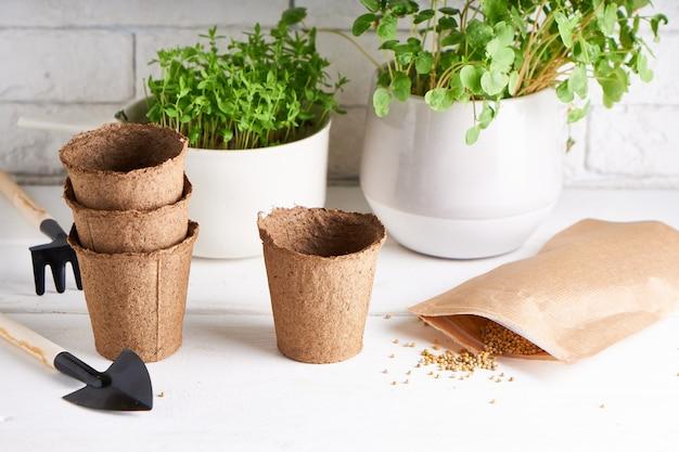 園芸用具が付いている窓辺の箱の種から育てられた初期の苗 Premium写真