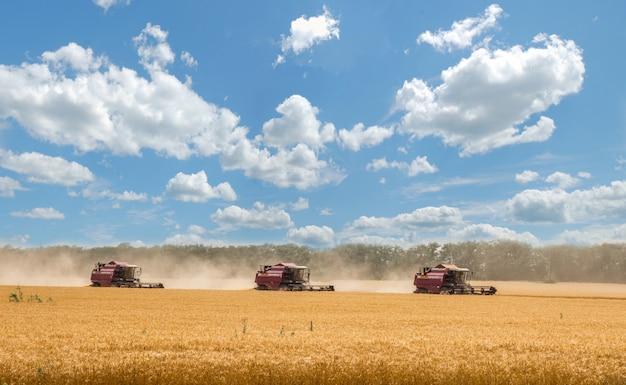 穀物畑 Premium写真