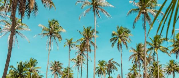 Кокосовая пальма под голубым небом. старинный фон. проездной. ретро тонированное. мягкий фокус Premium Фотографии