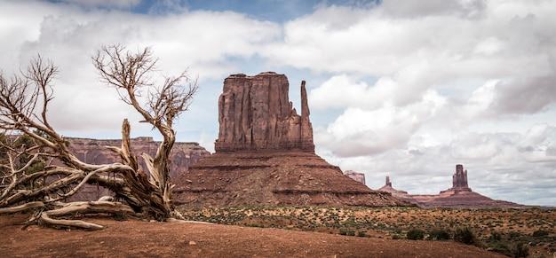 砂漠の風景の乾燥木 Premium写真