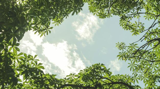 Зеленые листья с фоном неба в дневное время Premium Фотографии
