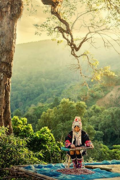 Холм акха, собирающий кофейные ягоды арабики на плантации, чианг рай, таиланд Premium Фотографии
