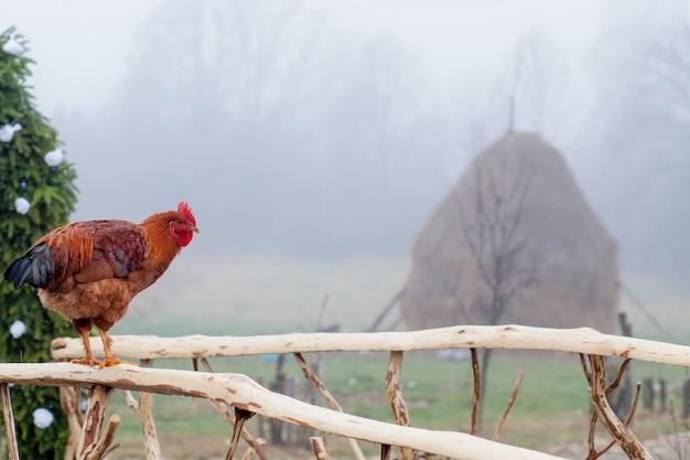 バックグラウンドで小屋と木製のピケットフェンスの上に立って赤鶏 Premium写真