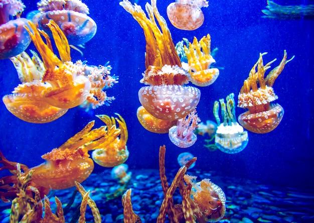 Оранжевая медуза Premium Фотографии