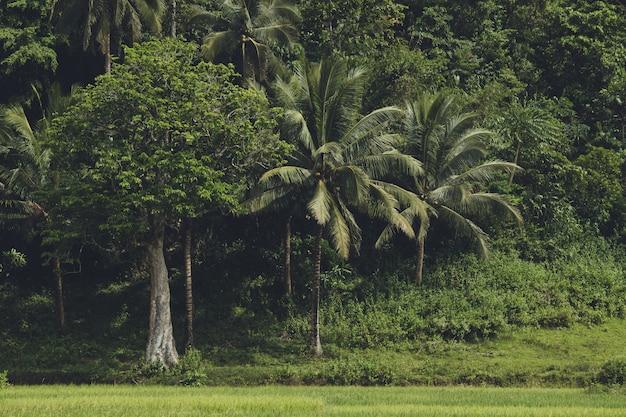 熱帯アジアの森の濃い緑。 Premium写真