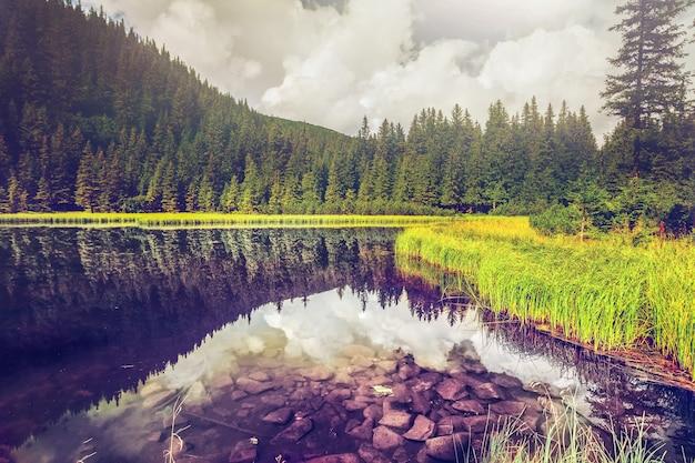 夏の山湖の森 Premium写真