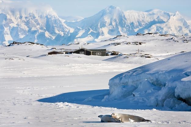 南極の美しい風景 Premium写真