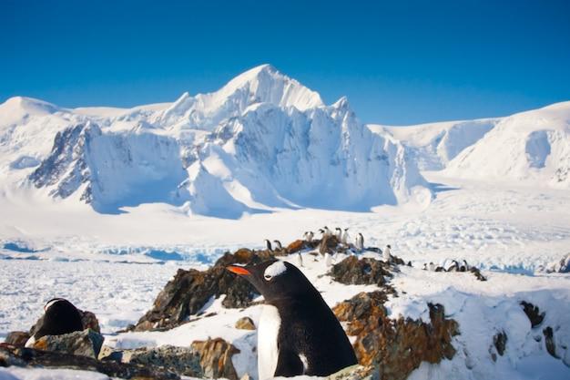 南極のペンギン Premium写真