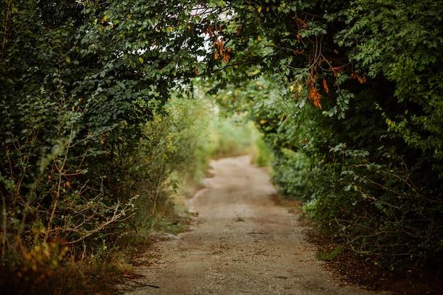 森の中の緑の路地 Premium写真