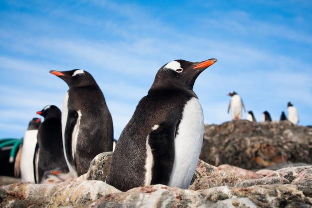 Пингвины в антарктиде Premium Фотографии
