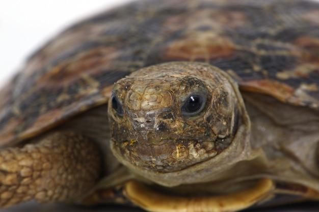 Черепаха голова Бесплатные Фотографии