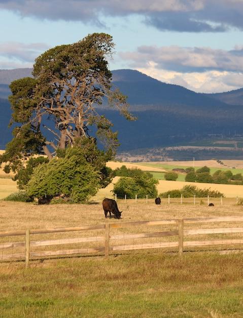 田舎、動物の放牧 無料写真