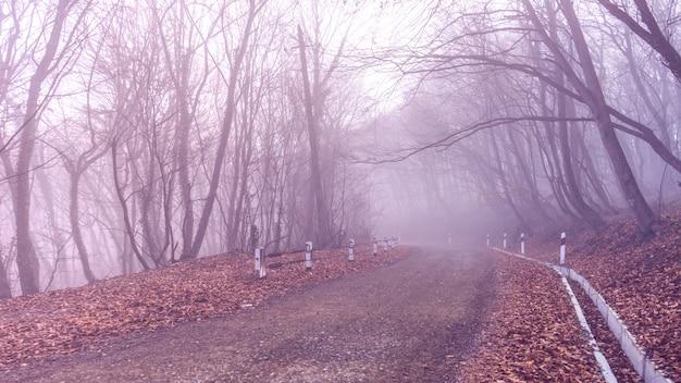 森の霧 Premium写真
