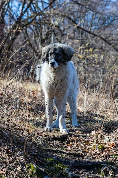 かわいいホームレス犬 Premium写真