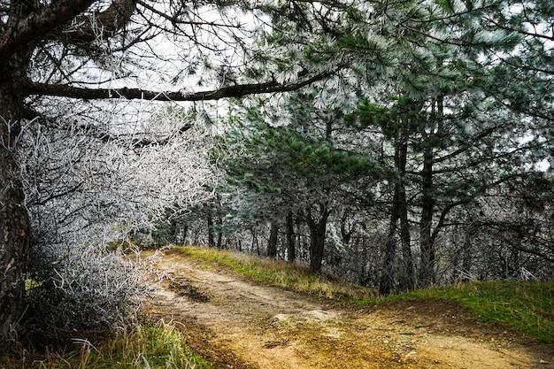 街の外の冬 Premium写真