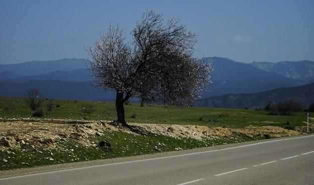 道路に木だけの春の風景 Premium写真