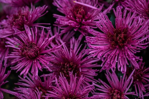 Осенние цветы фон Premium Фотографии