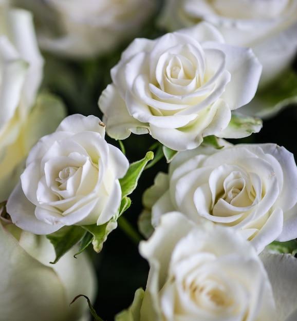 Белые розы в букете Premium Фотографии