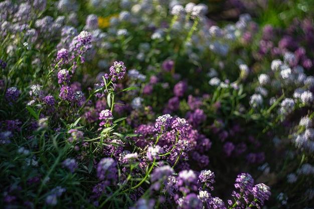 Цветущие растения в саду Premium Фотографии