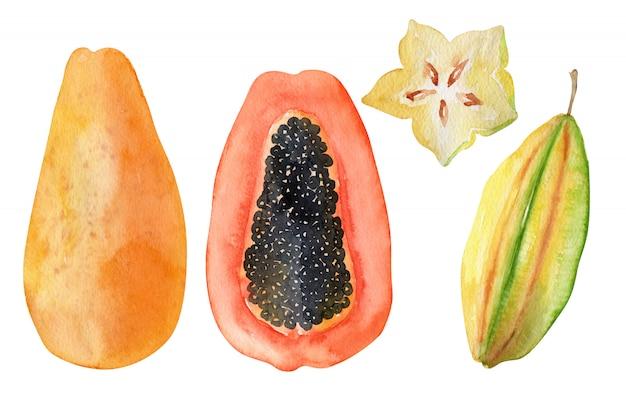 水彩オブジェクト明るいエキゾチックなフルーツ Premium写真