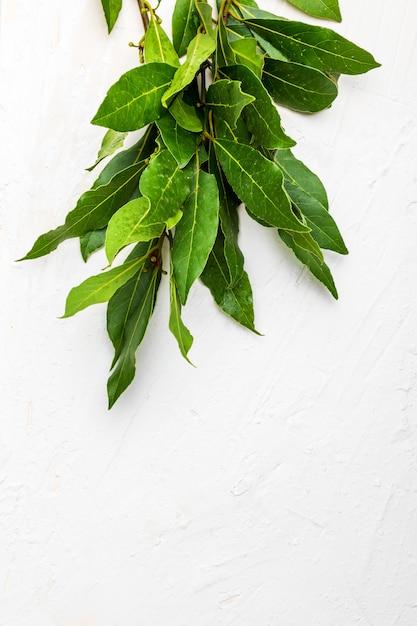 Букет из свежих лавровых листьев. Premium Фотографии