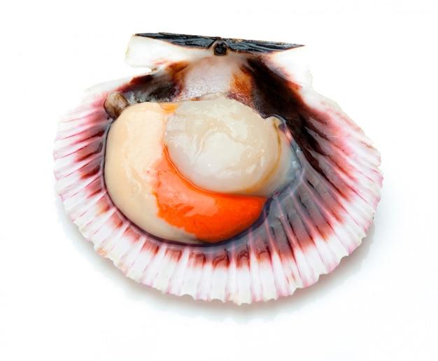 Морские гребешки свежие, сырые и чистые на белом Premium Фотографии