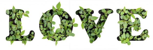紙のステンシルに緑の葉の愛という言葉 Premium写真