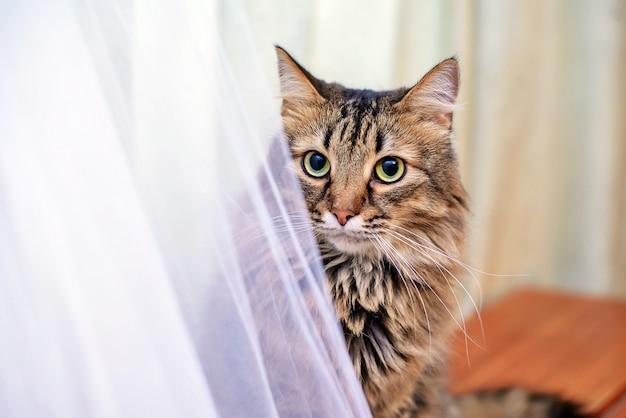 Кот рядом со свадебным платьем Premium Фотографии
