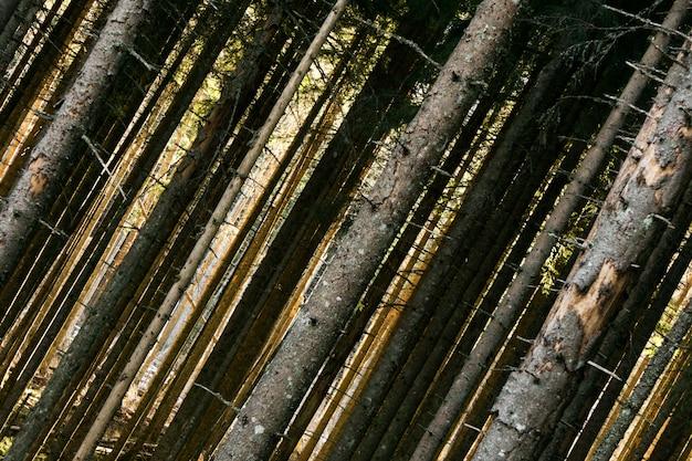 秋の森の木。自然の緑の木の日光の背景。 Premium写真