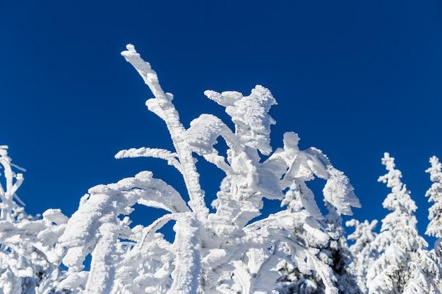 木に厚い雪 Premium写真