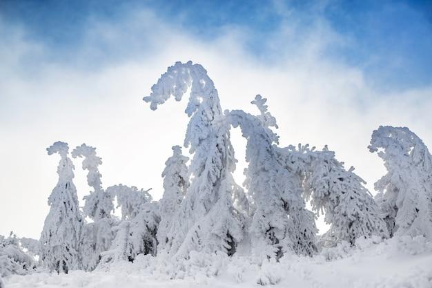 雪の圧力から曲がる美しい冬の風景と木々 Premium写真