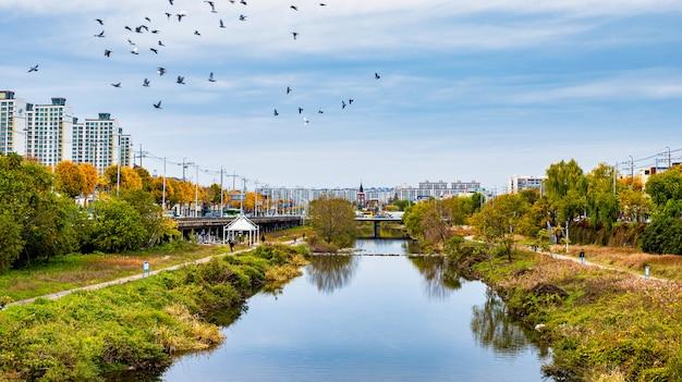 光州市と韓国の光州の川の美しい秋のシーズン。 Premium写真