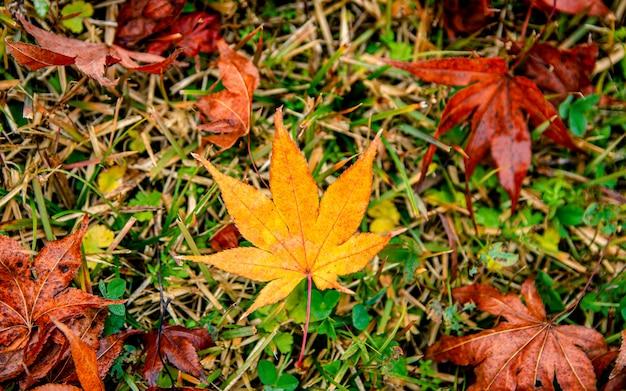 韓国の秋の紅葉。 Premium写真