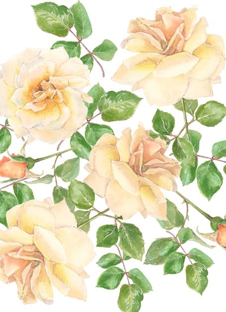 クリーム色のバラとつぼみ Premium写真