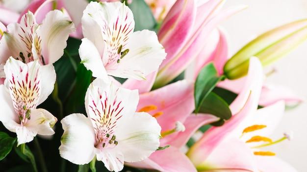 白いアルストロメリアの花と白地にピンクのユリのクローズアップの花束。テキスト、コピースペースの空き領域を持つ花春の背景。美しい花が咲くと組成。 Premium写真