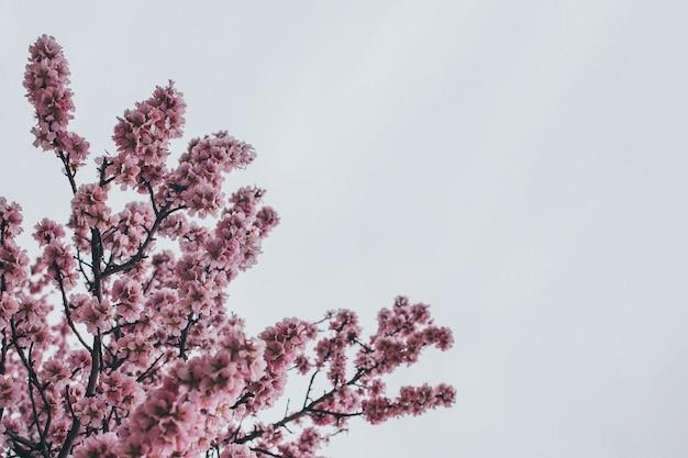 Фон весенняя картинка с цветущими ветвями Premium Фотографии