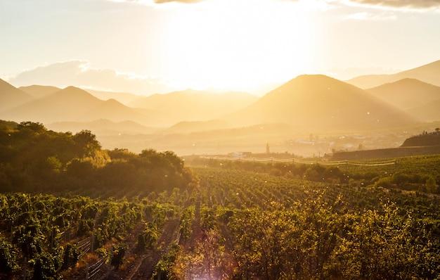 日没時のブドウ園 Premium写真