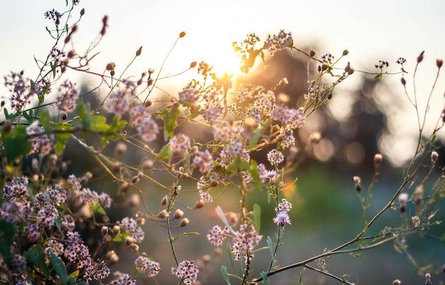 Полевые цветы на закате Premium Фотографии