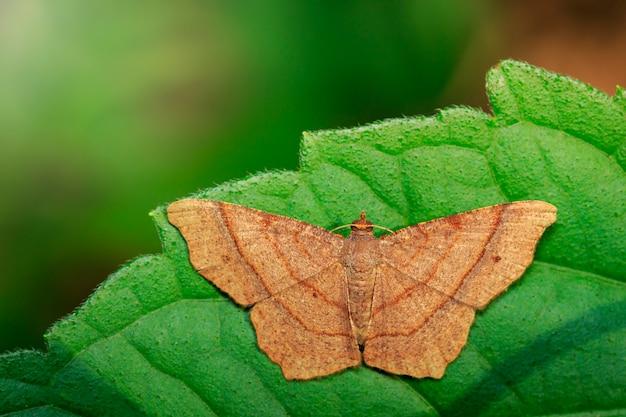 Изображение коричневой бабочки на зеленых листьях Premium Фотографии