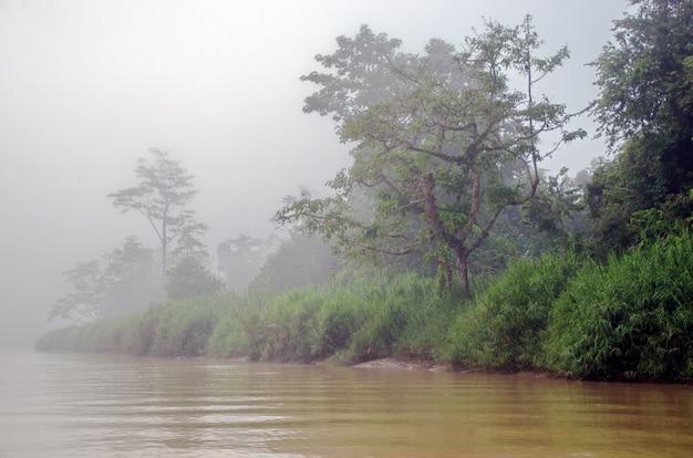 Река кинабатанган, борнео, малайзия Premium Фотографии